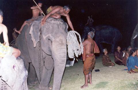 Surin Elephan herders